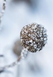 Eisblumen_7595